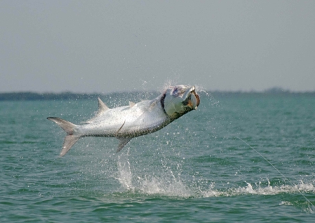 Catching tarpon in the Florida Keys