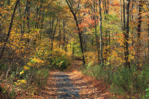hiking the appalacian trail